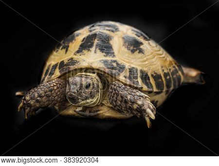 A Small Tortoise On The Black Background
