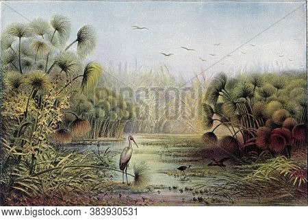Upper Nile landscape with thicket of papyrus and reeds, From the Universe and Humanity, 1910.
