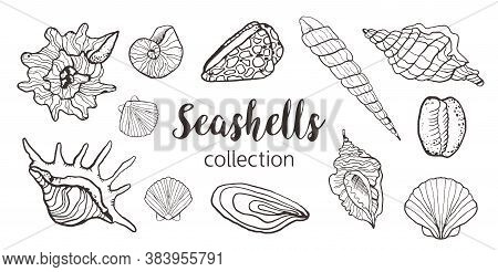 Collection Of Seashells In Sketch Style Black And White Isolated For Seafood Restaurant Menu, Ocean