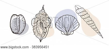 Vector Set With Seashells On A Light Background. Sketch Style Seashells With Color. Illustrations Fo
