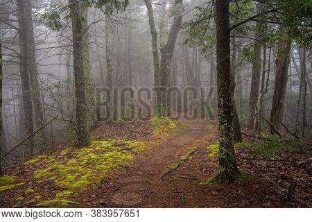 Fog Covers Ridge Top Trail In The Smokies