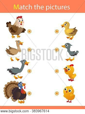 Matching Game, Education Game For Kids. Animals With Their Young. Chicken, Duck, Goose, Turkey.