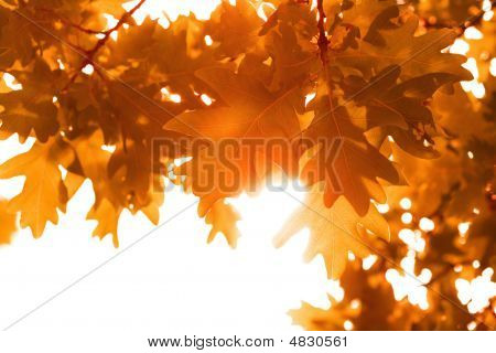 frame of autumn leaves isolated over white poster