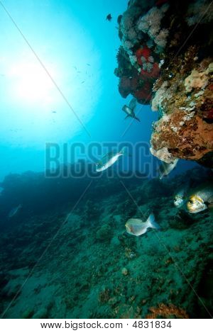 coral sun ocean and fish taken in the red sea. poster