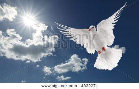 white dove flying on clear blue sky poster