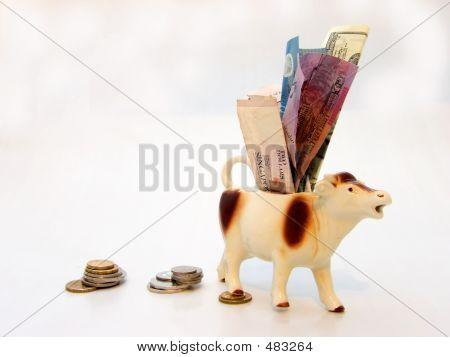 The Cash Cow