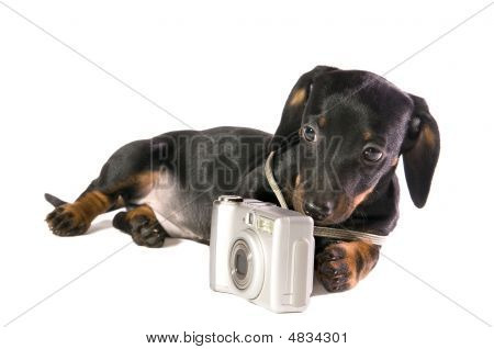 Black dog Lays with a camera on white background isolated close up poster