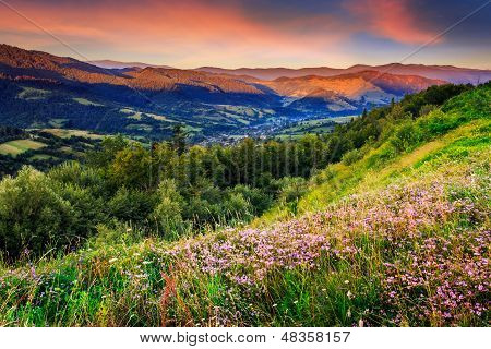 Wild Flowers In Mountains