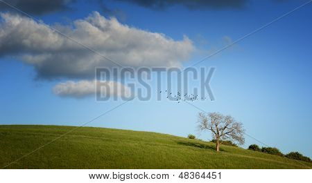 Tree on green field and birds