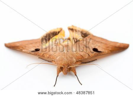 big butterfly on white isolate background
