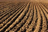 the image shows the furrows in a field after plowing it poster
