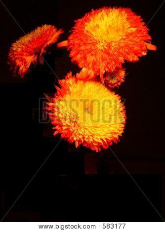 Fireflowers