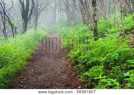 Craggy Gardens Blue Ridge Mountain Hiking Trail