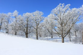 Bright Winter Landscape