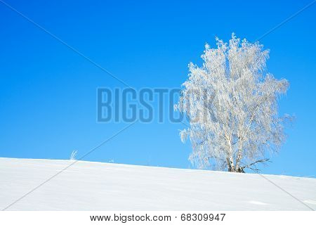 Winter Landscape With A Lonely Tree And The Blue Sky