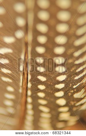 Feather Background - Nature's Patterns from the Guinea Fowl