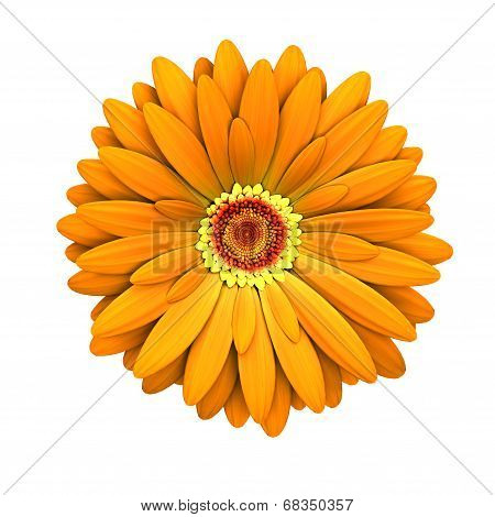Orange Daisy Flower Isolated - 3D Render