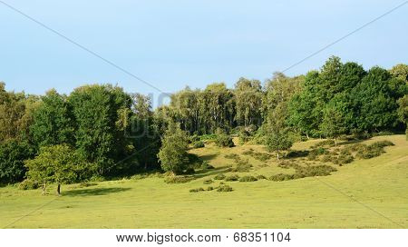 Landscape Of The New Forest