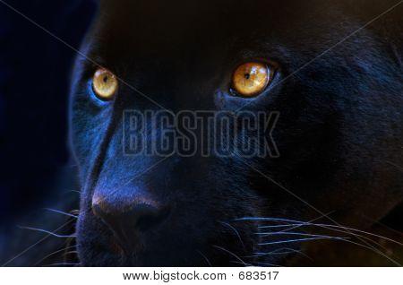 Die Augen von einem Raubtier