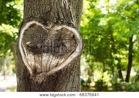 Heart In The Bark Of A Tree.tree With Heart Shape. Heart Wooden Cut Texture