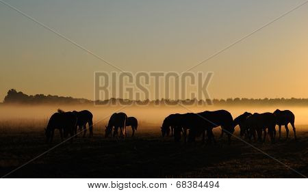 Herd of horses grazing in a field on a background of fog and sunrise poster