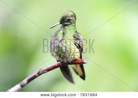 Reinigung von Hummingbird