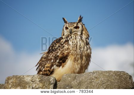Owl on a stone wall