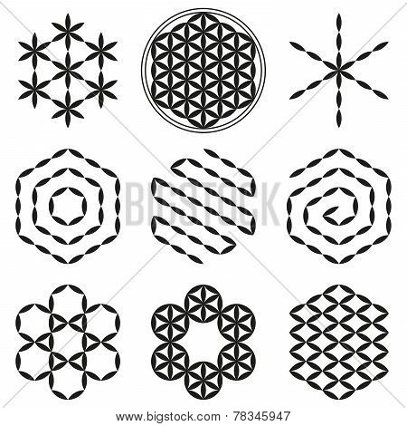 Flower of Life Extracts