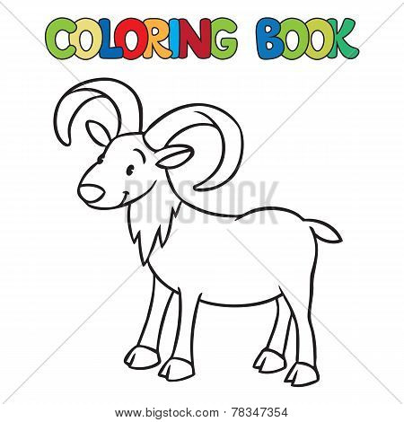 Little Funny Urial Or Ram