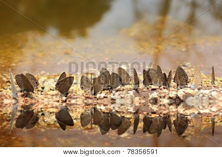 Butterfly And Water Reflex