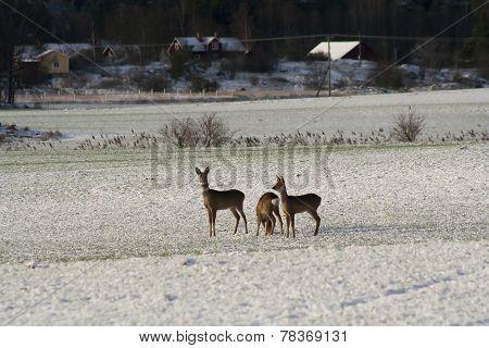 deers on snowcovered meadow