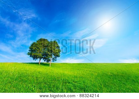Landscape Tree In Clear Green And Blue Nature And Sun On Blue Sky