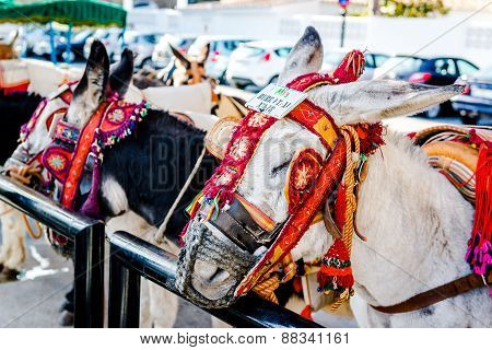 Famous donkey taxi