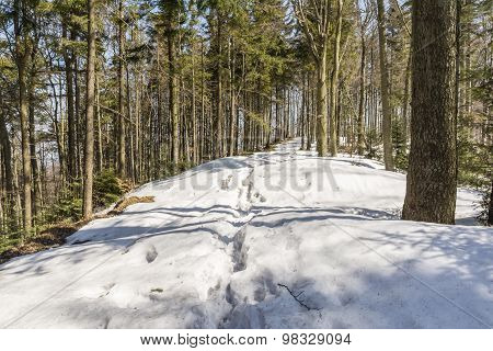 Small Snowdrifts On The Trail
