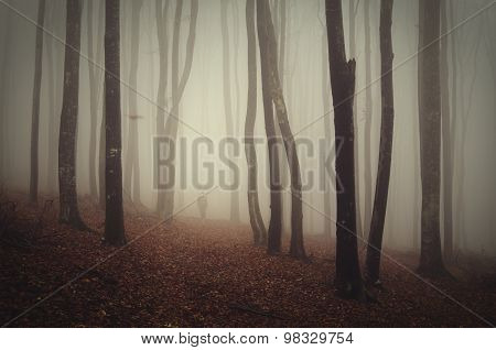 Ghost trough trees in mysterious forest with fog on Halloween