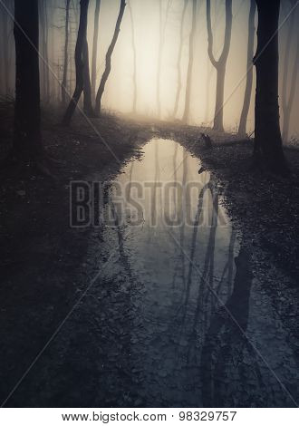 Lake in haunted forest with mysterious fog on Halloween