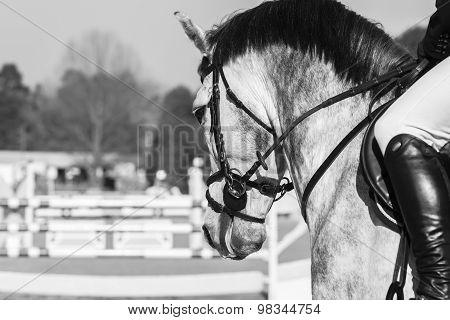 Horse Head Vintage
