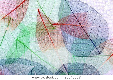 Abstract colorful skeleton leaves background