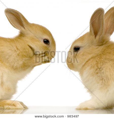 Rabbits Dating