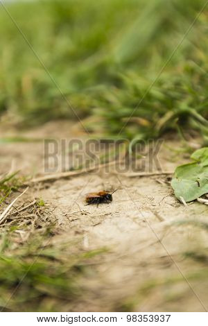 Insect On The Ground