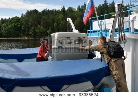 VALAAM ISLAND, RUSSIA - JULY 29, 2015: Vyacheslav Alekseev (right) and others carrying the cage with Ladoga ringed seal from the ship. Animals were cured and released into the Ladoga lake