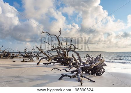 Early morning on Driftwood Beach at Jekyll Island Georgia