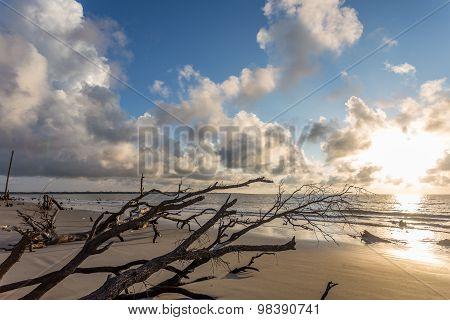 Sunrise on Driftwood Beach at Jekyll Island Georgia