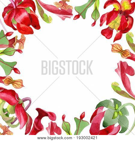 Wildflower Sarracenia flower frame in a watercolor style isolated. Full name of the plant: Sarracenia Aquarelle wild flower for background, texture, wrapper pattern, frame or border.