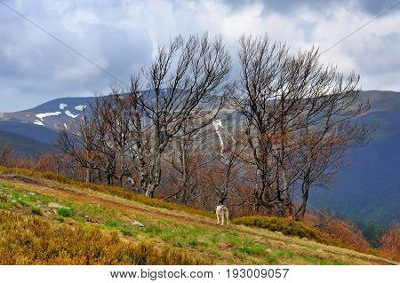 Early Spring In The Mountains. Early Spring Landscape In The Carpathian Mountains, Ukraine.