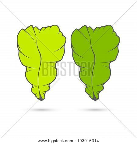 Vector stylized image of two leaves of lettuce for salads toasts and sandwiches.