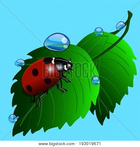 Ladybird on grass with water drops. Vector Illustration on blue background.