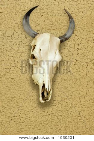 Skull of Bull over a Cracked Surface poster