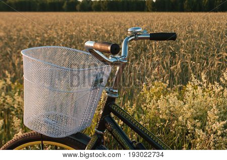 Bikes in the countryside, Bicycle handlebar and basket on the background of a wheat field
