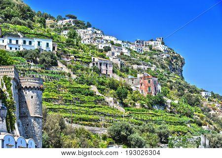 Citrus Plantations On The Hills Of Amalfi, Italy